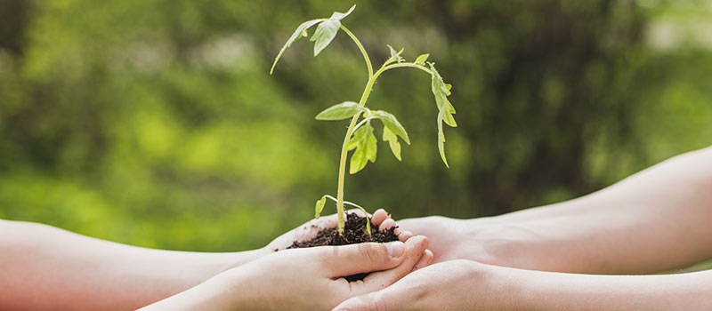 Green Initiative by SA Technologies as a part of CSR